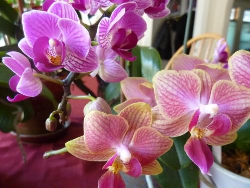 2016-orchids2